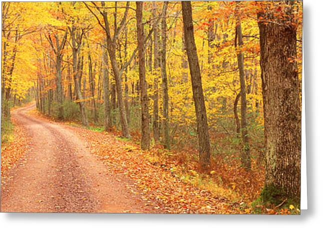 Path Hickory Run State Park Pa Usa Greeting Card by Panoramic Images