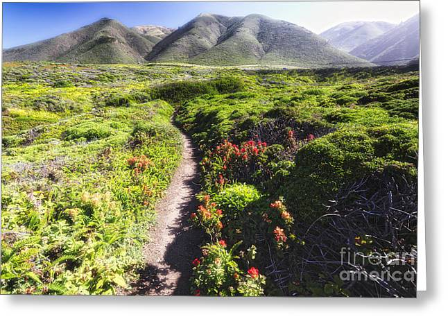 Big Sur California Greeting Cards - Path in a Coastal Meadow  Greeting Card by George Oze