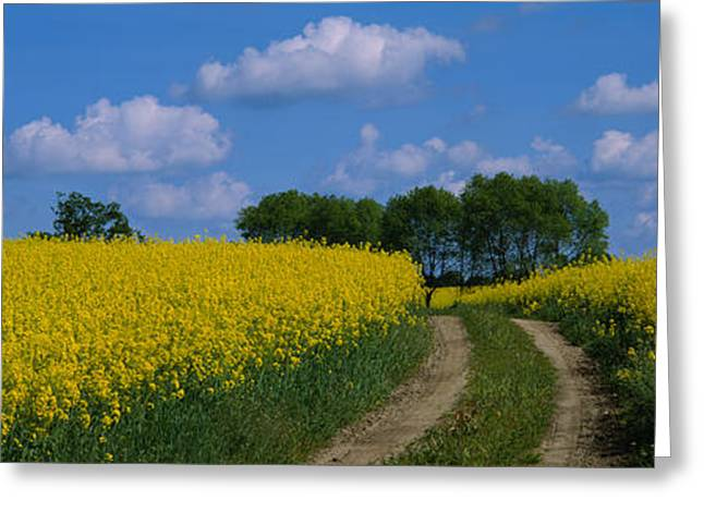 Cultivation Greeting Cards - Path In A Field, Germany Greeting Card by Panoramic Images