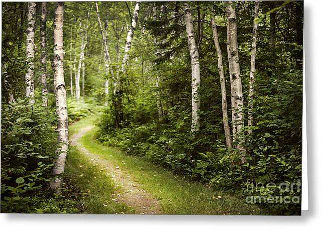 Path Greeting Cards - Path in birch forest Greeting Card by Elena Elisseeva