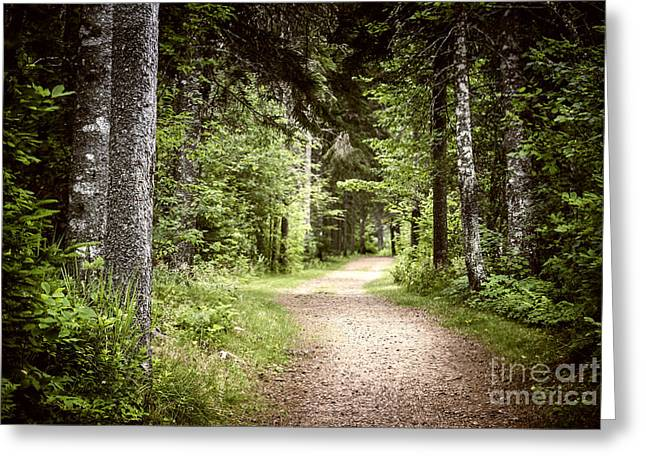 Gloomy Greeting Cards - Path in green forest Greeting Card by Elena Elisseeva