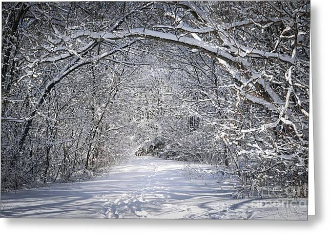 Bent Greeting Cards - Path in snowy winter forests Greeting Card by Elena Elisseeva
