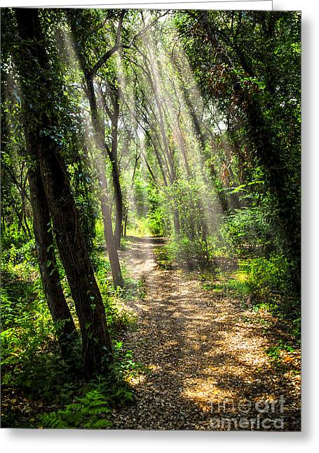Forests Greeting Cards - Path in sunlit forest Greeting Card by Elena Elisseeva