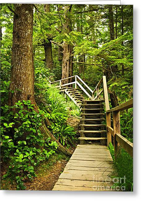 Conifer Tree Greeting Cards - Path in temperate rainforest Greeting Card by Elena Elisseeva