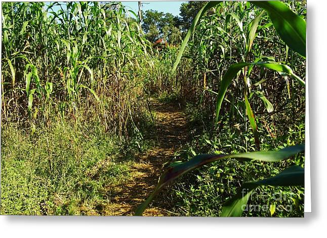 Hayride Greeting Cards - Path In The Corn Maze Greeting Card by D Hackett