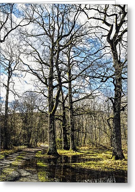 Green Day Greeting Cards - Path in the forest Greeting Card by Tilyo Rusev