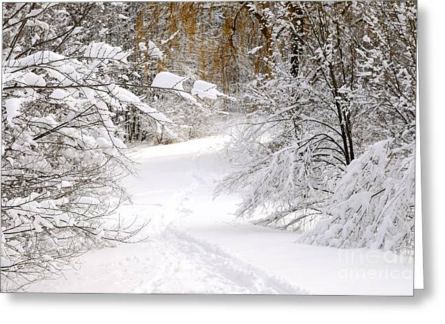 Winter Park Greeting Cards - Path in winter forest Greeting Card by Elena Elisseeva