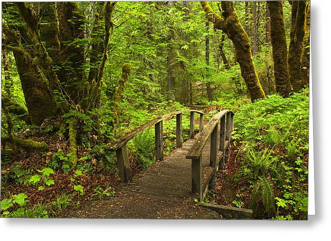 Hike Greeting Cards - Path into the Woods Greeting Card by Andrew Soundarajan