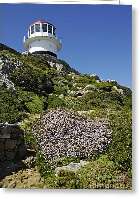 Path Leading To Lighthouse At Cape Point Greeting Card by Sami Sarkis