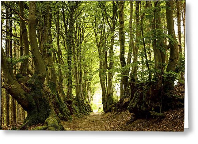 Mystic Photographs Greeting Cards - Path lined whit old beeches. Allier. Auvergne. France Greeting Card by Bernard Jaubert