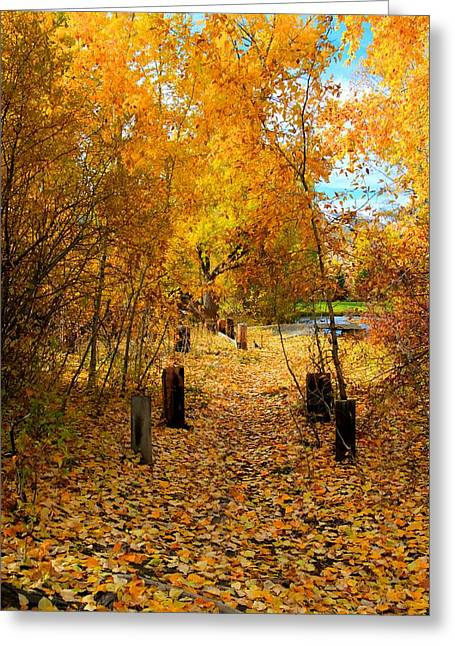 Montana Landscapes Photographs Greeting Cards - Path of Fall Foliage Greeting Card by Kevin Bone