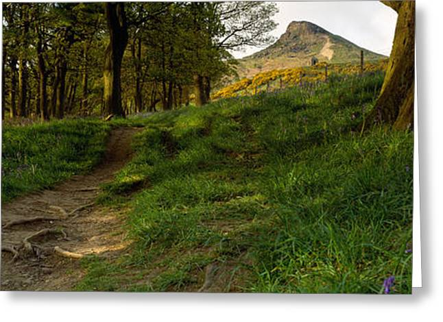 Topping Greeting Cards - Path Running Through A Forest, Newton Greeting Card by Panoramic Images