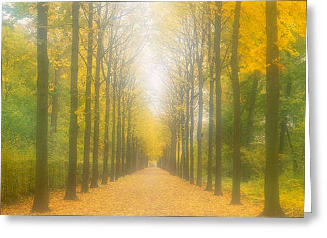 Yellow Leaves Greeting Cards - Path Schwetzingen Germany Greeting Card by Panoramic Images