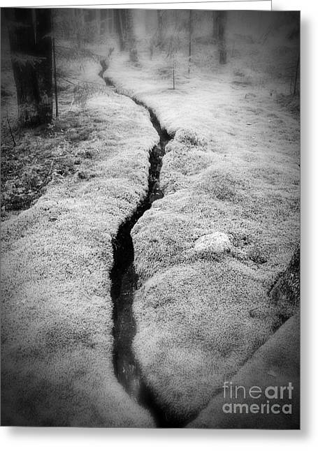 Moss Greeting Cards - Path Taken Greeting Card by Edward Fielding