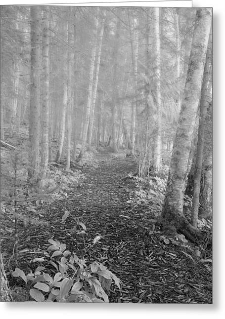 Haze Greeting Cards - Path Through A Mixed Woods Forest In Greeting Card by Roberta Murray