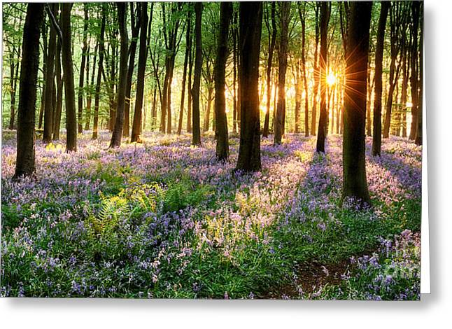 Light Shaft Greeting Cards - Sunrise path through bluebell woods Greeting Card by Simon Bratt Photography LRPS