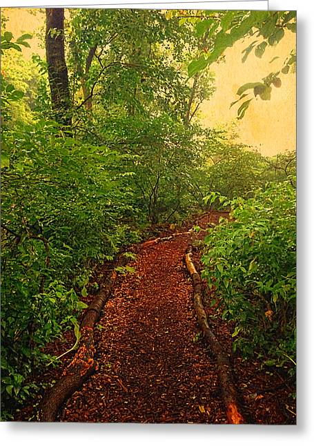 Walking The Beat Greeting Cards - Path through Forest Greeting Card by Maggie Vlazny