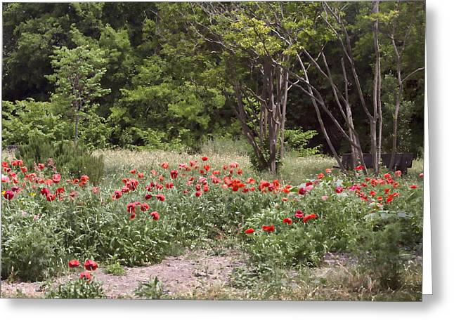 Crape Greeting Cards - Path Through the Red Poppies Greeting Card by Linda Phelps