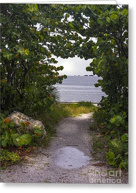 Sea Shell Greeting Cards - Path through the Sea Grapes Greeting Card by Marvin Spates