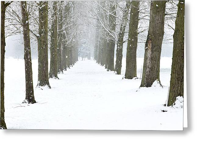Snowy Day Greeting Cards - Path Through The Trees In A Mild Snow Shower Greeting Card by Fizzy Image