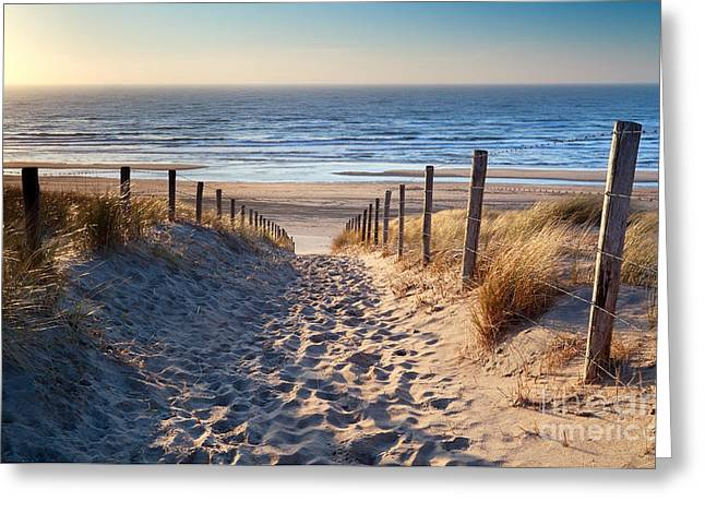 North Holland Greeting Cards - path to North sea beach in gold sunshine Greeting Card by Olha Rohulya