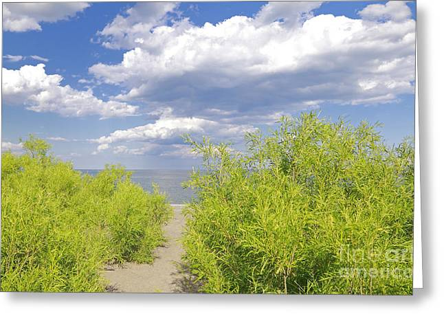 Willow Lake Greeting Cards - Path to Secret Beach Greeting Card by Charline Xia