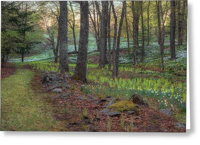 Connecticut Scenery Greeting Cards - Path to the Daffodils Greeting Card by Bill  Wakeley
