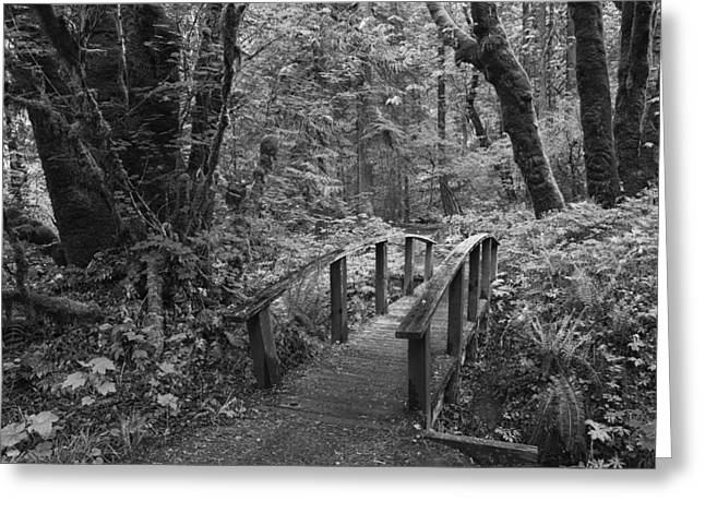 Hike Greeting Cards - Path to the Woods Greeting Card by Andrew Soundarajan