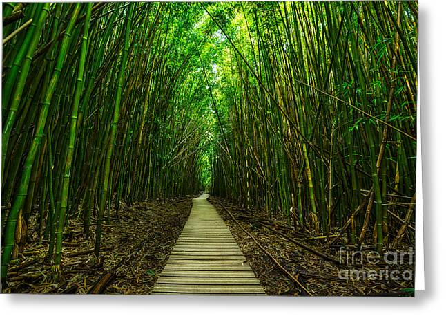 Magical Tree Greeting Cards - Path to Zen Greeting Card by Jamie Pham