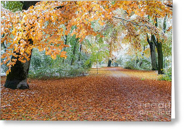 Landsape Greeting Cards - Path Trough The Fall Greeting Card by Hannes Cmarits