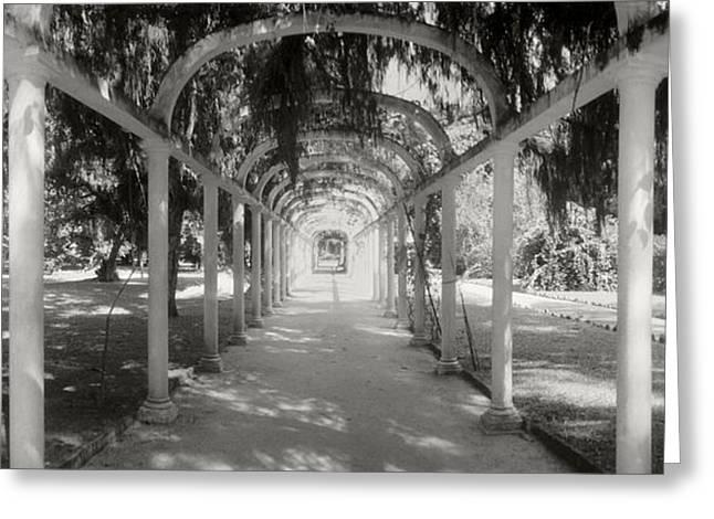 Botanical Greeting Cards - Pathway In A Botanical Garden, Jardim Greeting Card by Panoramic Images