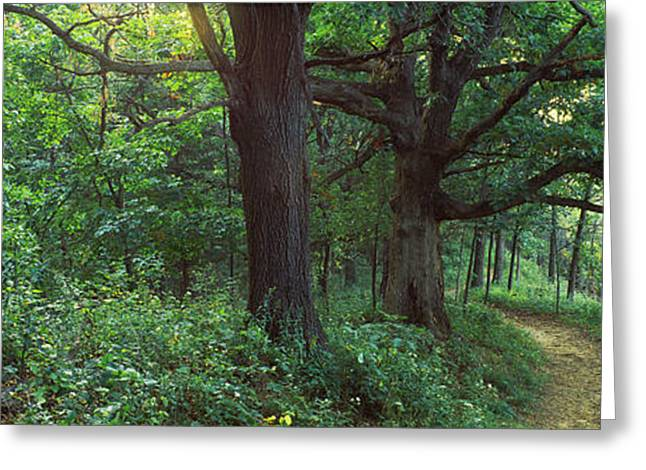 Mississippi River Scene Greeting Cards - Pathway In A Forest, Mississippi River Greeting Card by Panoramic Images