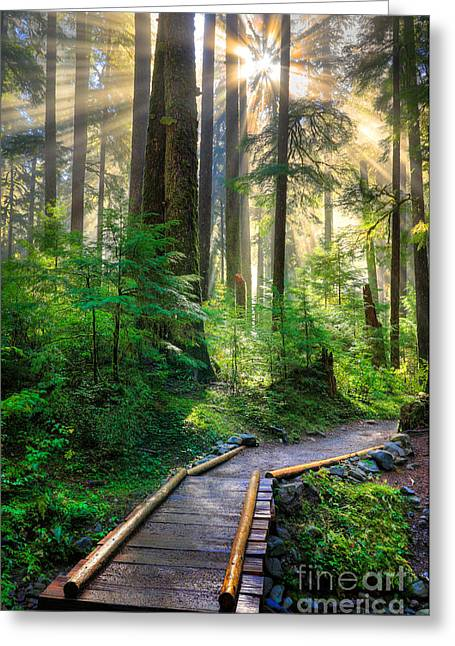 Lighted Pathway Greeting Cards - Pathway into the Light Greeting Card by Inge Johnsson
