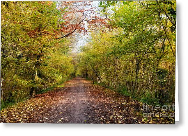 Nature Study Digital Greeting Cards - Pathway through Sunlit Autumn Woodland Trees Greeting Card by Natalie Kinnear