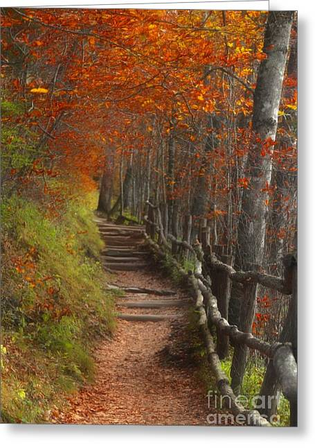 Split Rail Fence Greeting Cards - Pathway to Autumn Greeting Card by Benanne Stiens