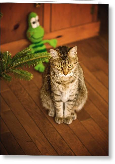 American Shorthair Greeting Cards - Patience Greeting Card by Anita Miller