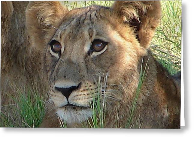 Lions Pyrography Greeting Cards - Patient Lion Cub Greeting Card by Bruce W Krucke