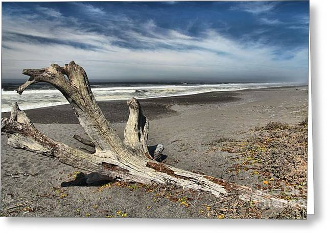 Northern California Beaches Greeting Cards - Patricks Drift Log Greeting Card by Adam Jewell