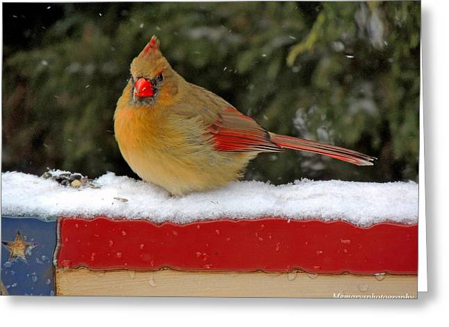 Patriotic Cardinal Greeting Card by Mary Williamson