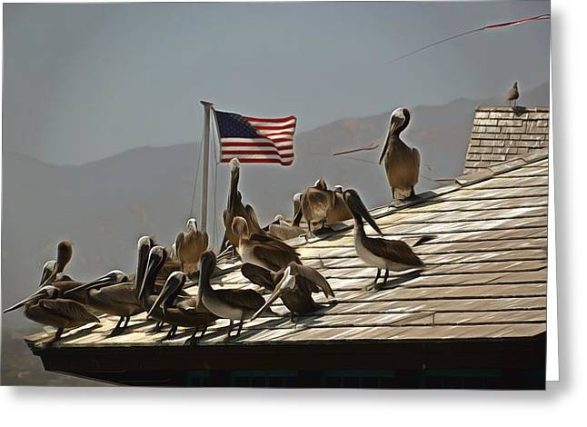 Stearns Wharf Greeting Cards - Patriotic Pelicans  Greeting Card by Barbara Snyder