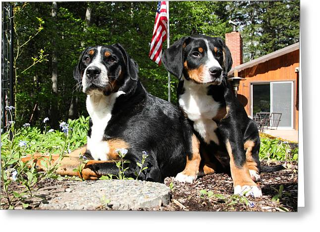 Swiss Photographs Greeting Cards - Patriotic Pet Greeting Card by Aaron Aldrich