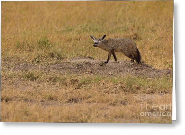 Bushy Tail Greeting Cards - Patrolling Home Turf Greeting Card by Ashley Vincent