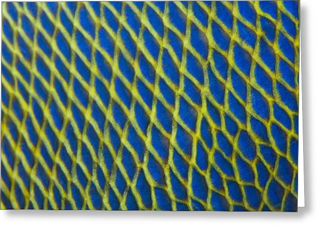Fish Scales Greeting Cards - Pattern detail of fish scales Greeting Card by Science Photo Library