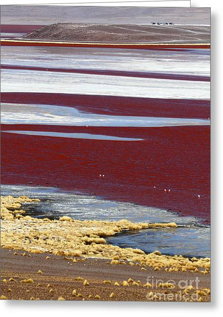 Sud Greeting Cards - Patterns at Laguna Colorada Greeting Card by James Brunker