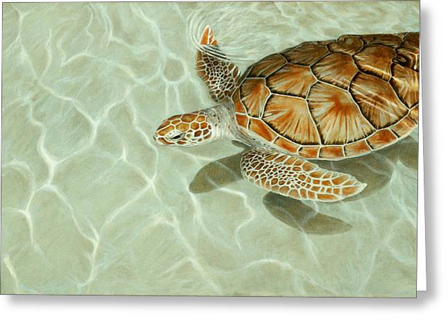 Sea Turtle Greeting Cards - Patterns in Motion - Portrait of a Sea Turtle Greeting Card by Rob Dreyer AFC
