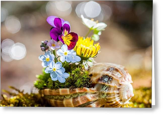 Shell Pattern Greeting Cards - Patterns In Nature Greeting Card by Aaron Aldrich