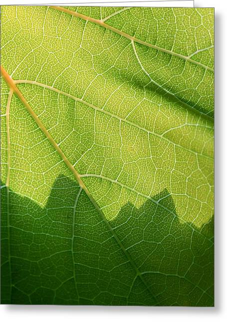 Vineyard Art Greeting Cards - Patterns In Nature Greeting Card by Heidi Smith