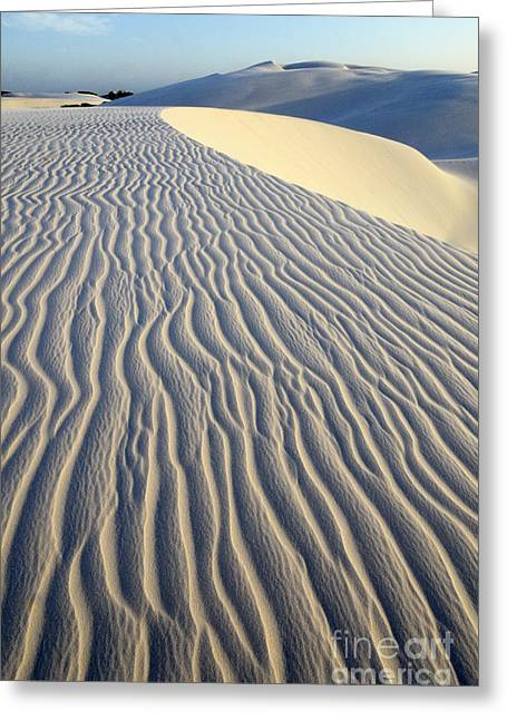 Sand Patterns Greeting Cards - Patterns In The Sand Brazil Greeting Card by Bob Christopher