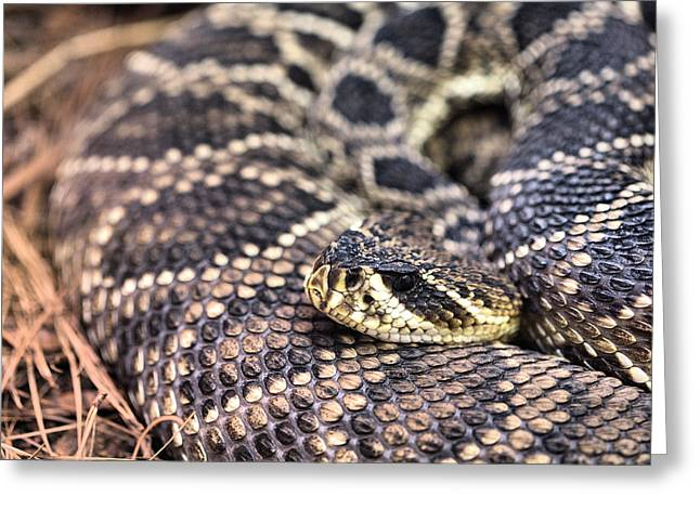 Rattle Snakes Greeting Cards - Patterns Greeting Card by JC Findley