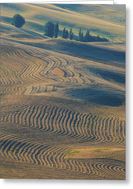 Usa Photographs Greeting Cards - Patterns of the Palouse Greeting Card by Latah Trail Foundation